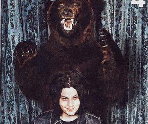 bear, jack white, and photography image