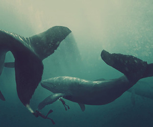 animals, beautiful, and diving image