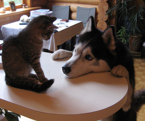 awww, cat, and dog image