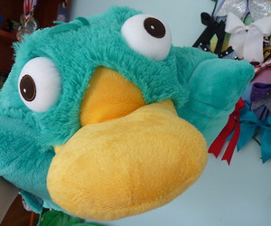 color, photography, and perry the platypus image
