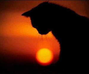 cat, sunset, and sun image