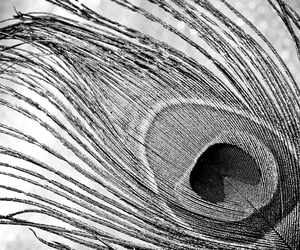 beautiful, black and white, and feather image