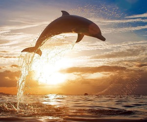 dolphin, clouds, and sun image