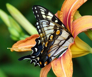 butterfly, flower, and flowers image