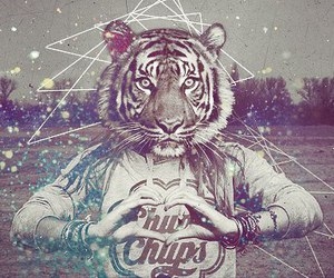 tiger and hipster image