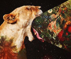lion, hipster, and animal image