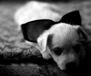 black and white, dog, and little image