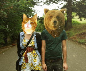 cat, couple, and bear image