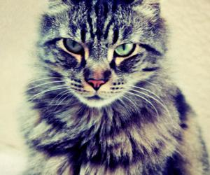 aggressive, animal, and beautiful image