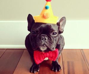 dog, birthday, and puppy image