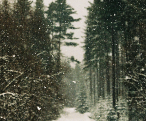 forest and snow image