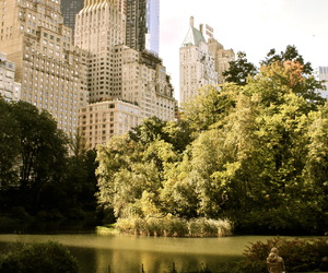 afternoon, buildings, and Central Park image