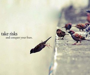 bird, quotes, and risk image