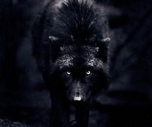 wolf, black, and animal image