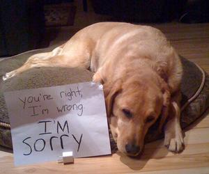 aw, sign, and dog image