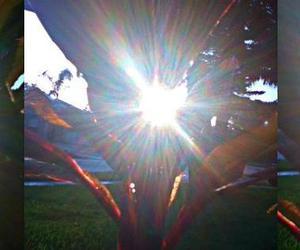 photography, sun shine, and plant image