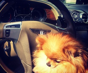 cute, dog, and Bentley image