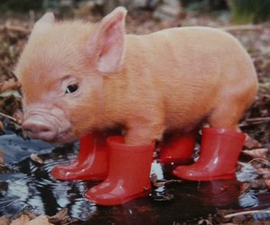 boots, piglet, and pig image