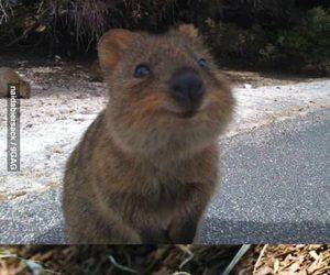 adorable, animal, and asdfghjkl image