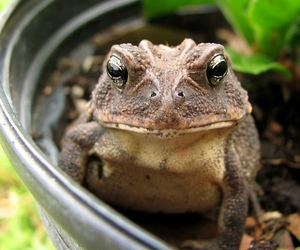 animals, frog, and toad image