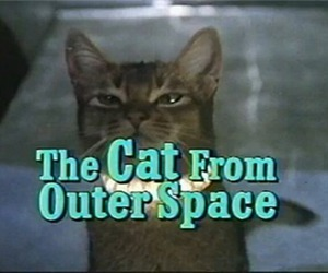 cat, grunge, and space image