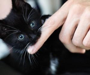 cat, Gatos, and mustache image