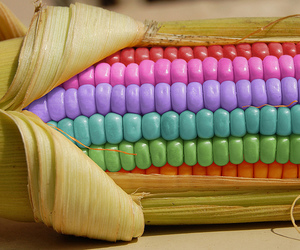 corn, food, and color image