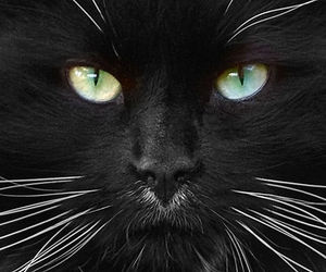 california, cat, and eyes image