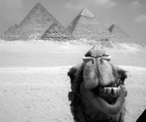 camel, black and white, and pyramid image