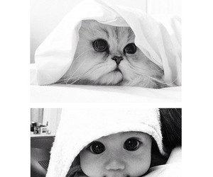 baby, cat, and Chinchilla image