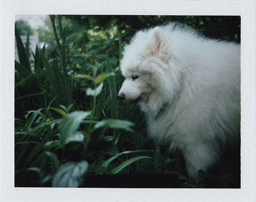dog, fluffy, and happythings image