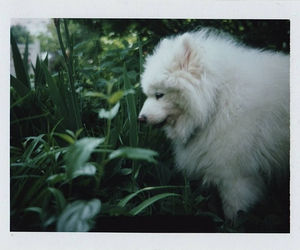 the_polaroids: this one is dark, i still have some lear