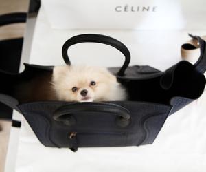 celine, purse, and pomerania image