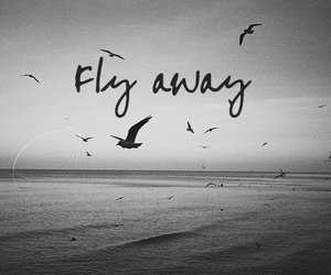 bird, fly, and quote image