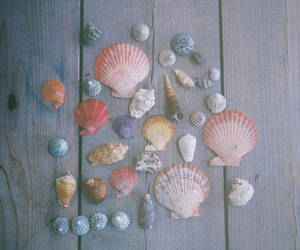 shell, sea, and vintage image