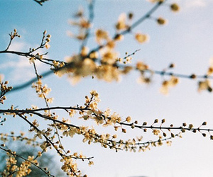 blossoms and vintage image