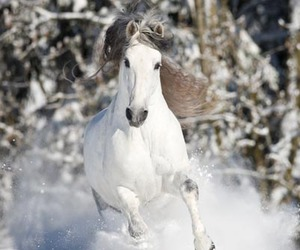 <3, horse, and horses image