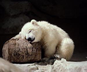 bear and animal image