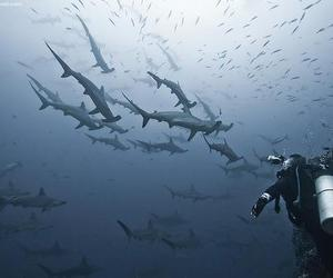 beautiful, blue, and sharks image