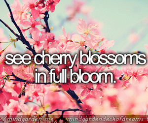 before i die, cherry blossoms, and dreams image