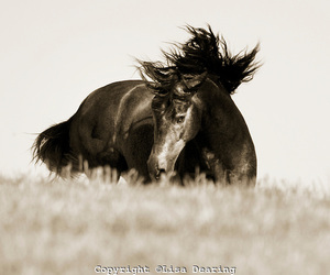 andalusian, beauty, and black image