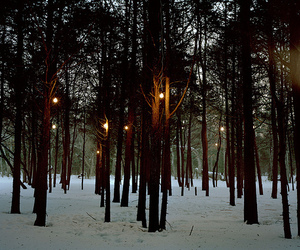 winter, cool, and forest image
