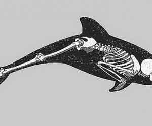 dolphin, skeleton, and black and white image