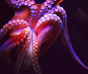 octopus, ocean, and tentacles image