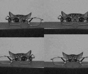 cat, glasses, and black and white image
