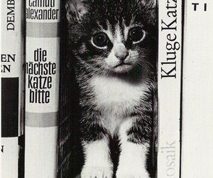 books, cat, and kitten image
