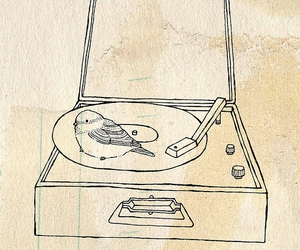 bird, music, and pretty image