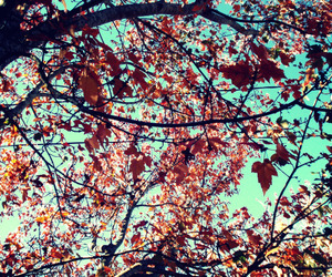 autumn, photography, and leaves image