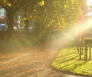 beautiful, leaves, and light image