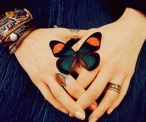 butterfly, rings, and hands image